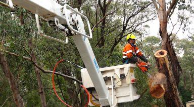 Abattage d'arbre a l'aide d'une nacelle
