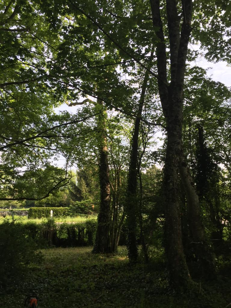 Abattage démontage d'un arbre a l'aide de cordes de retension a murlin 58700 1