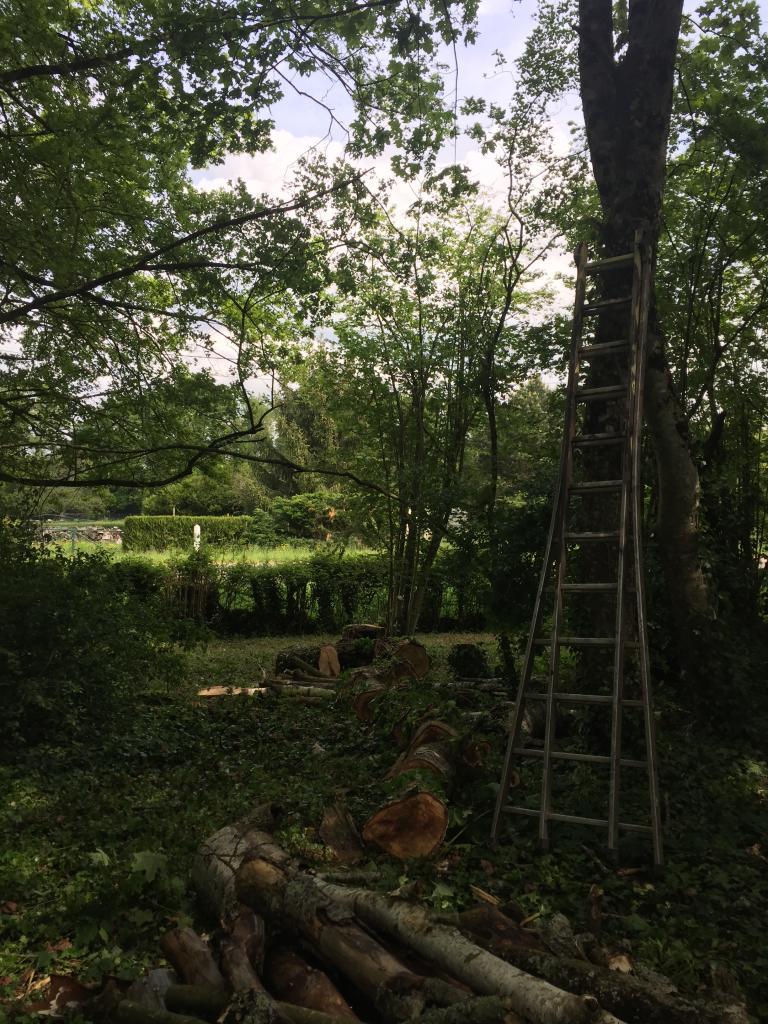 Abattage démontage d'un arbre a l'aide de cordes de retension a murlin 58700 2