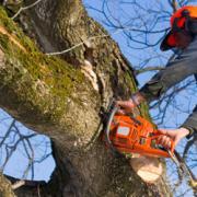 Débitage d'une branche a la tronçonneuse
