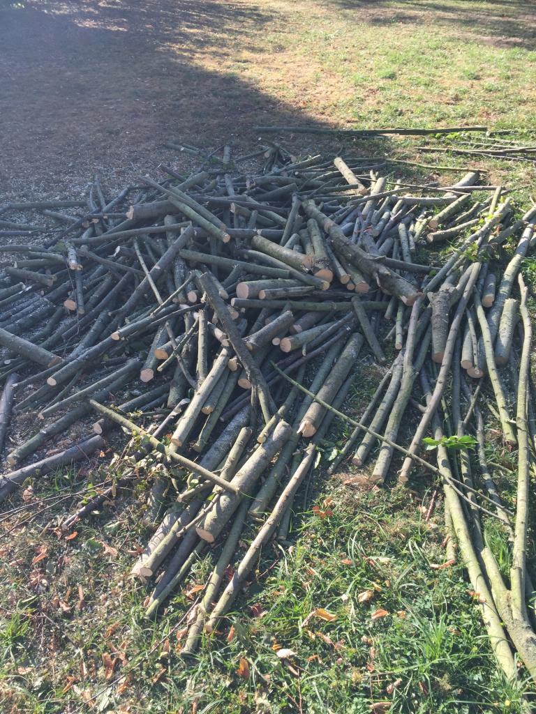 Debitage tronçonnage  coupe en morceaux des branches de charmes  a cosne cours sur loire