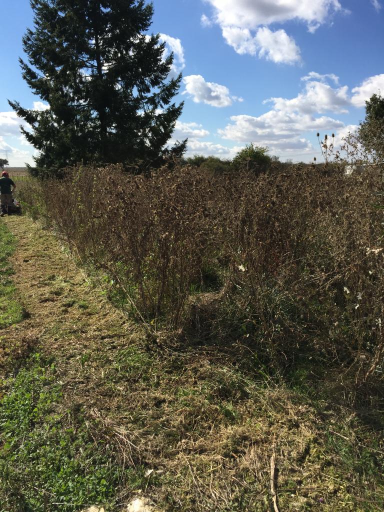 Défrichage terrain dans la Nièvre 58150 garchy avant