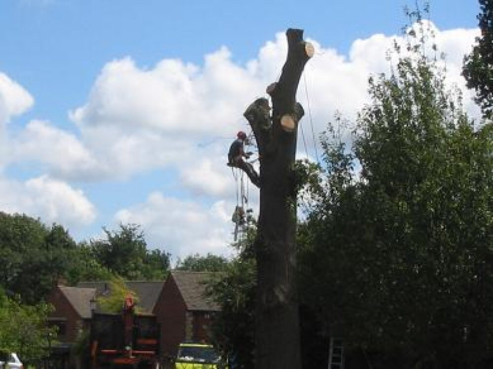 démontage d'arbre avec rétention