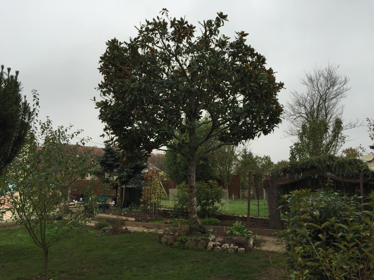 Elagage Arbre Rhododendron a Challuy proche Nevers dans la Nievre (2)