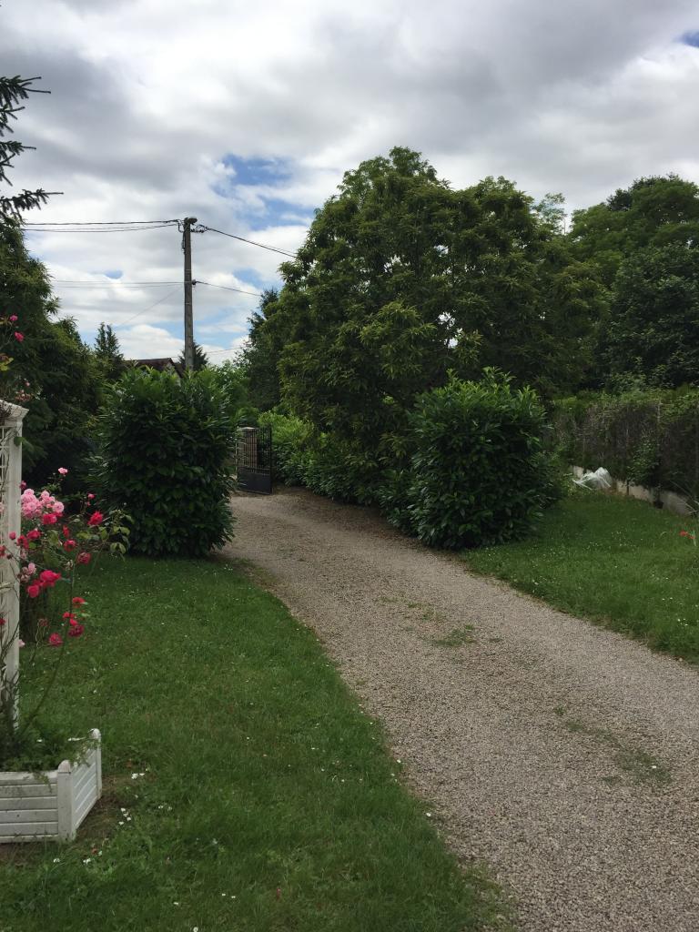 Elagage entretien jardin taille d'une haie de lauriers pouilly sur loire 58150 nievre 58 1