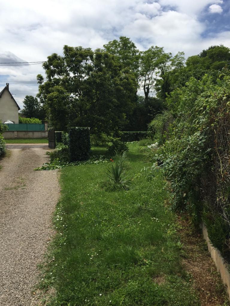 Elagage entretien jardin taille d'une haie de lauriers pouilly sur loire 58150 nievre 58 4