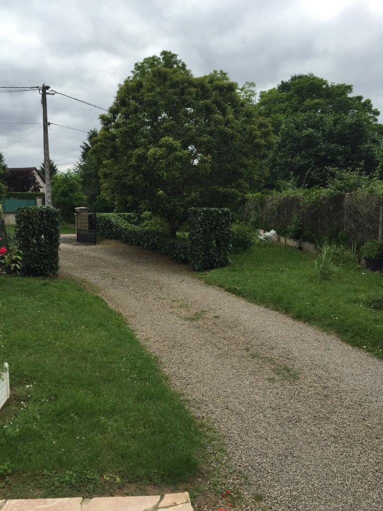 Elagage entretien jardin taille d'une haie de lauriers pouilly sur loire 58150 nievre 58 5