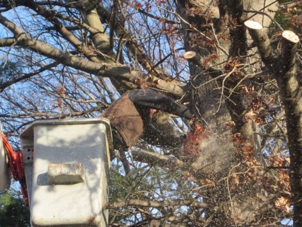 Taille d'arbre a l'aide d'une nacelle