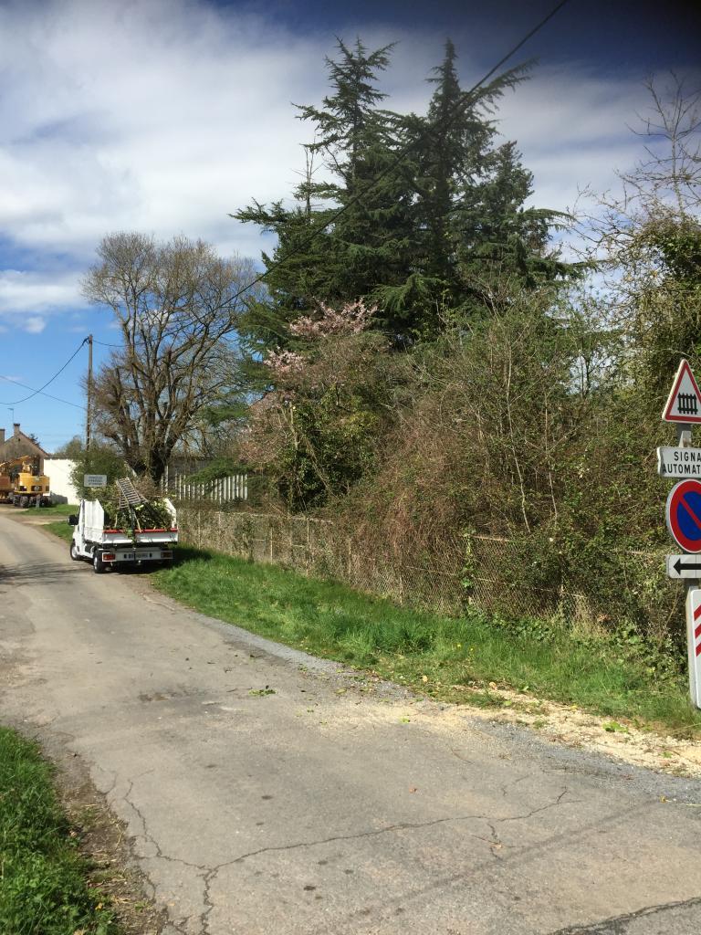 Taille d'entretien étêtage d'un arbre a la Celle sur Loire 58440 Nièvre 58 bourgogne 2