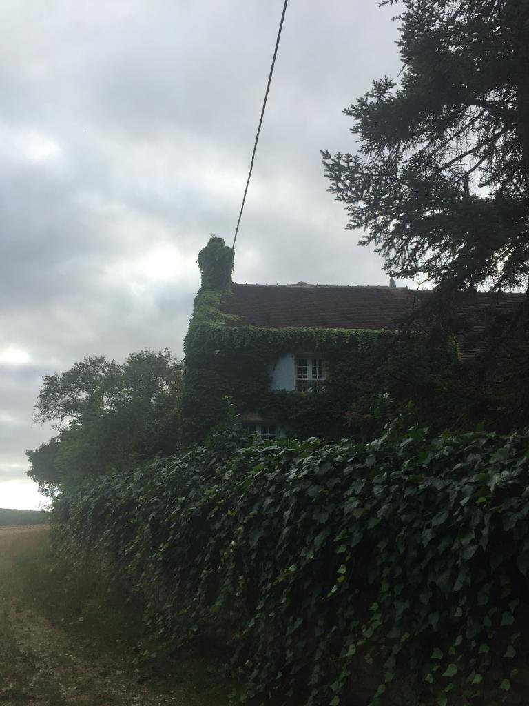 Taille de lierre sur une façade suilly la tour 58150 dans la nievre 58 bourgogne 1